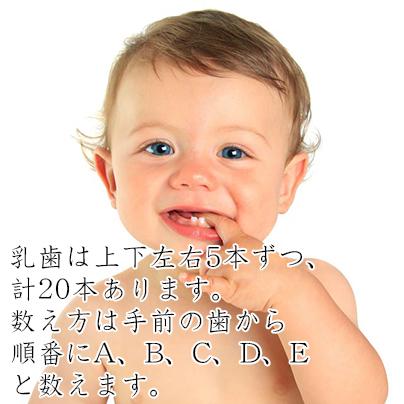乳歯の数え方