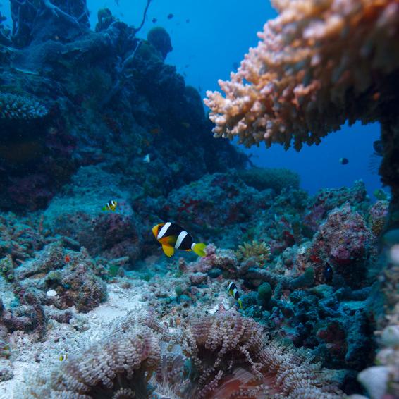 海の中の熱帯魚